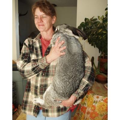 Diana's Rabbit Rescue Bunny Care